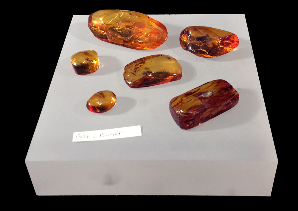 Baltic amber on display in Snell Hall, Cornell University.
