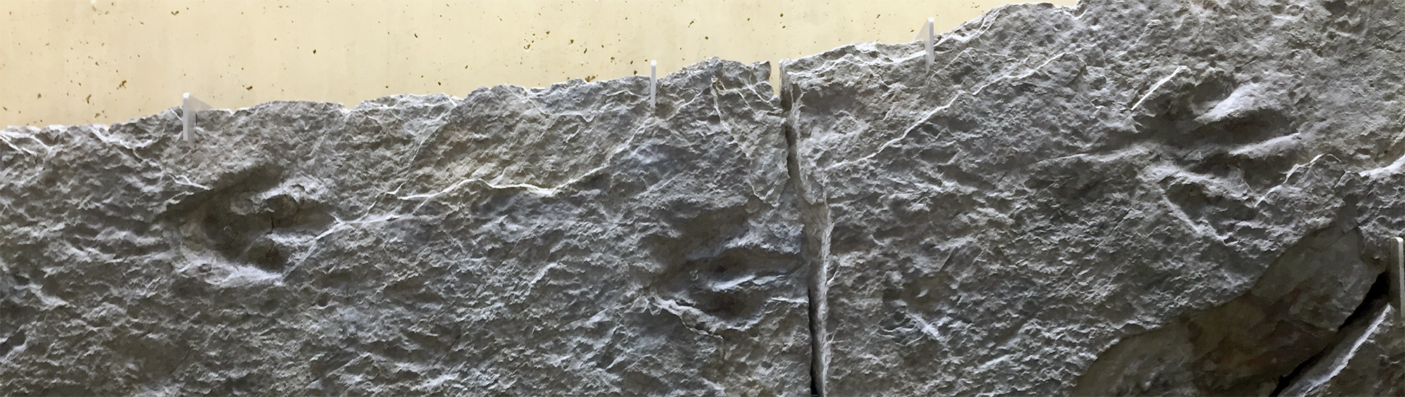 Jurassic-aged dinosaur footprints on display in Snee Hall on the Cornell University camps. These were collected from Connecticut or Massachusetts.