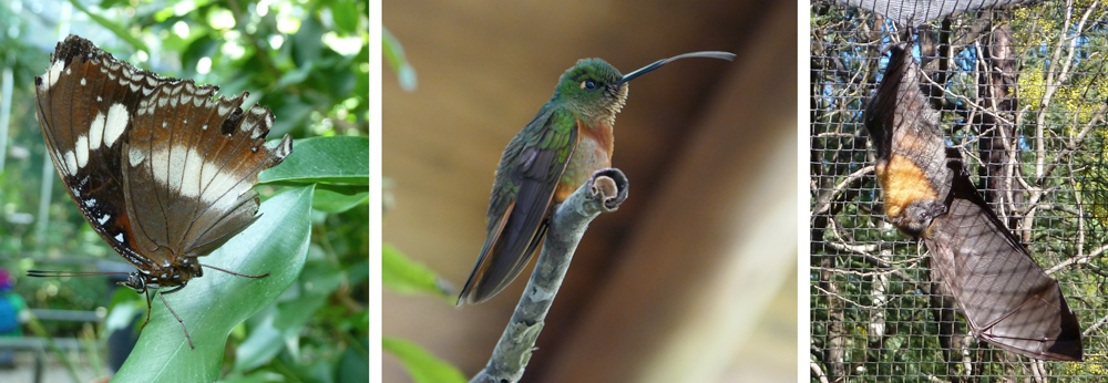 Composite image with pictures of a butterfly, hummingbird, and fruit bat.