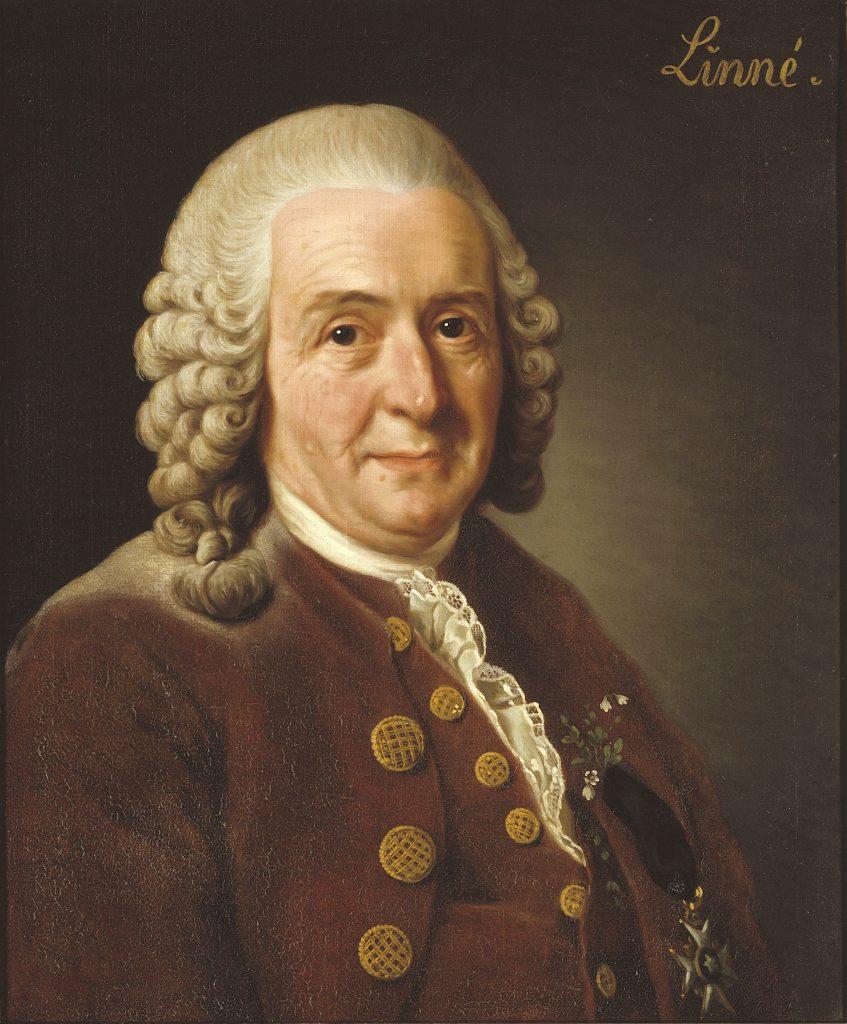 Portrait of Carl Linne (Linnaeus)