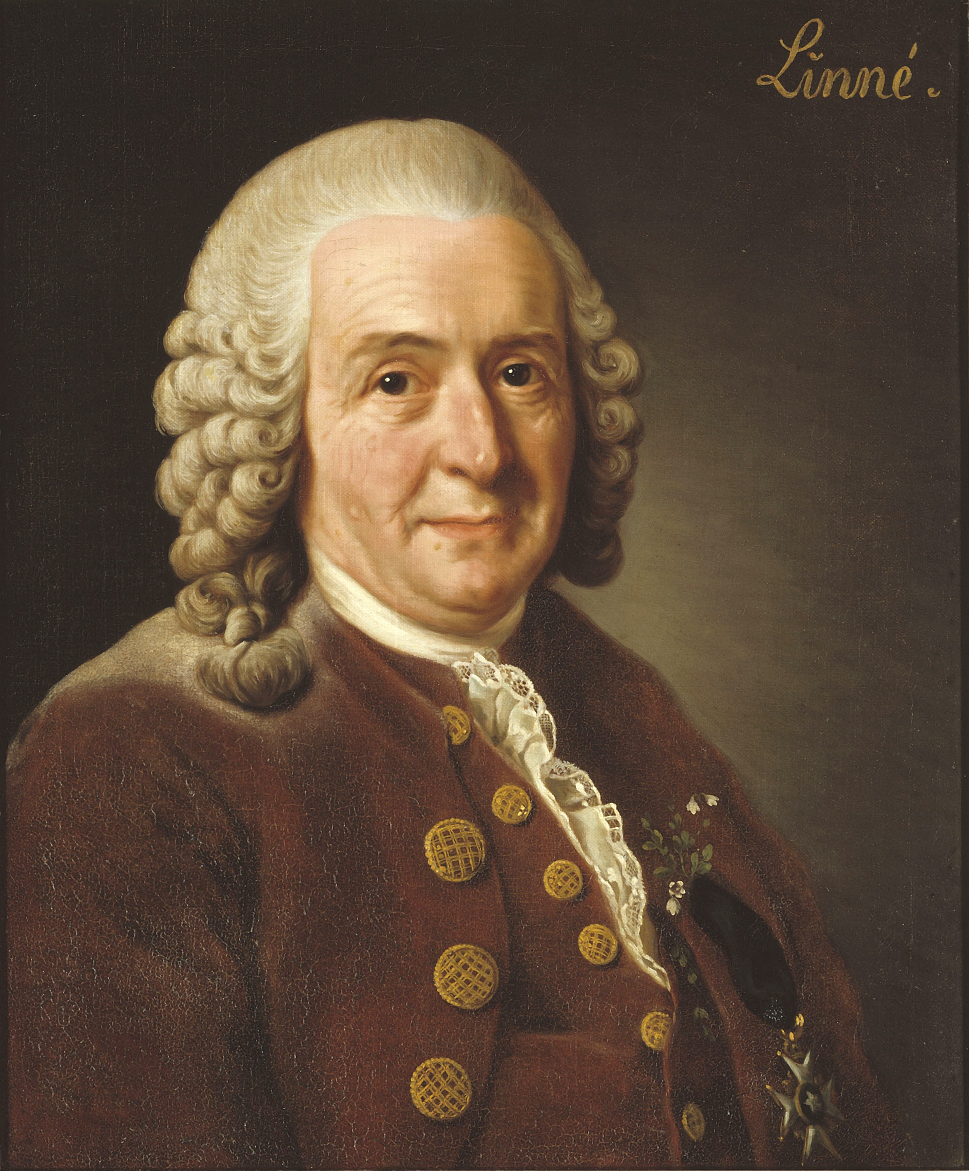 Portrait of Carl Linnaeus.