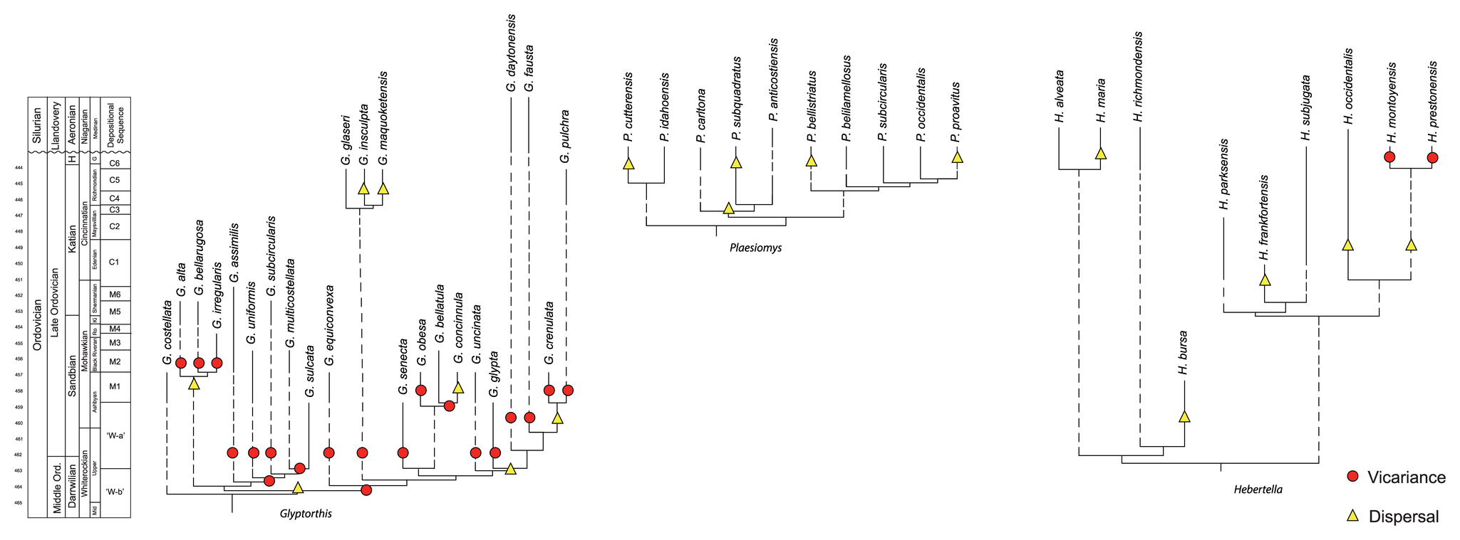 Image shows examples of cladograms scaled to time and including extinct taxa as terminals.