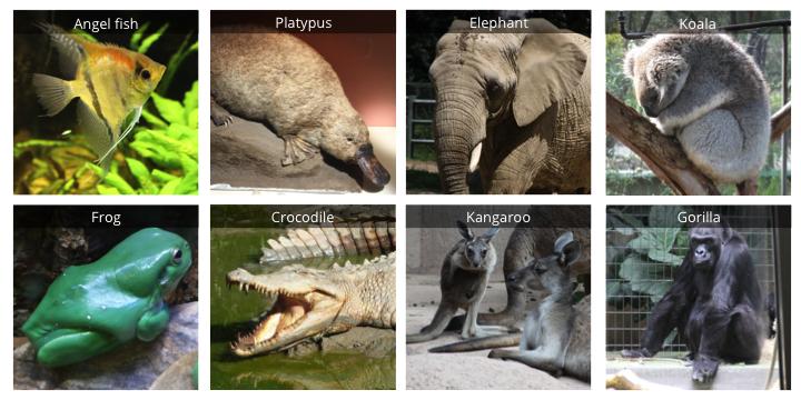 Additional taxa