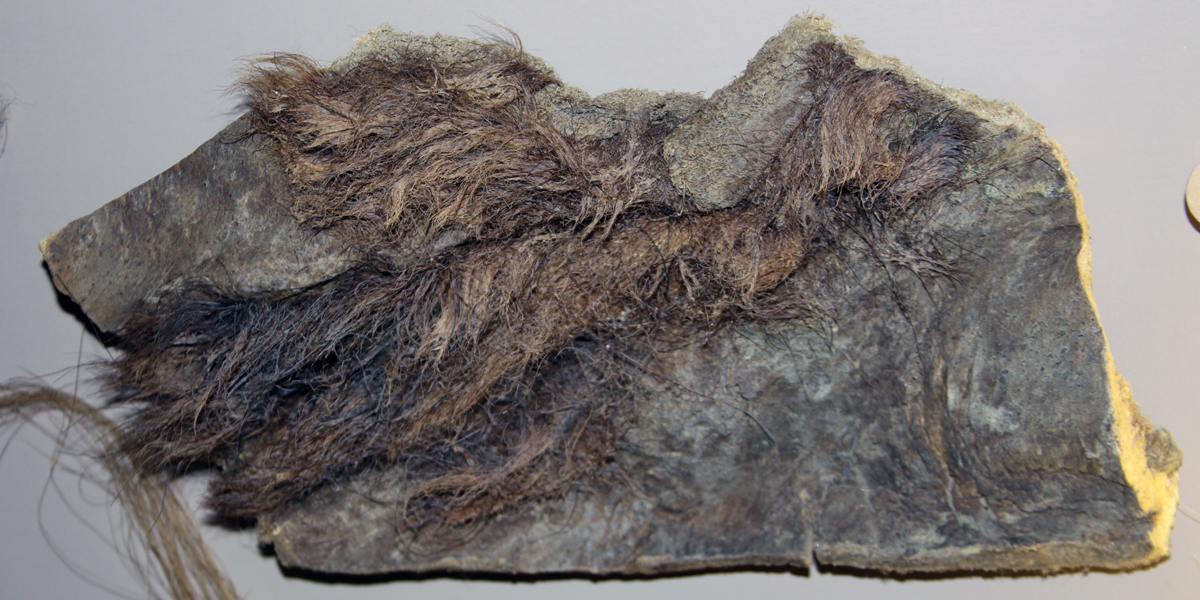 Hair collected from a frozen wooly mammoth specimen. Specimen is on display at the Naturhistorisches Museum Basel.