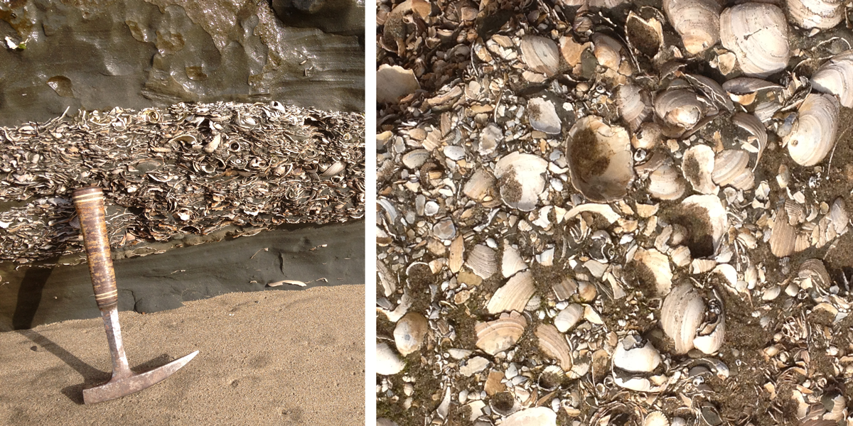 Fossil shell layer of the Purisima Formation exposed at Capitola Beach.