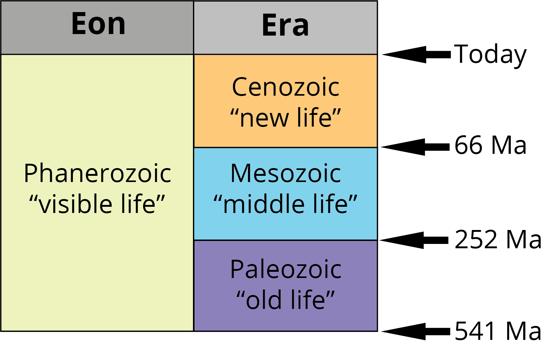 Eras of the Phanerozoic: Paleozoic, Mesozoic, Cenozoic