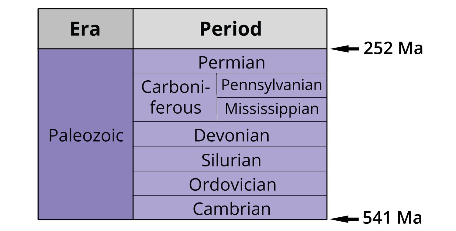 Periods of the Paleozoic era: Cambrian, Ordovician, Silurian, Devonian, Mississippian, Pennsylvanian, Permian