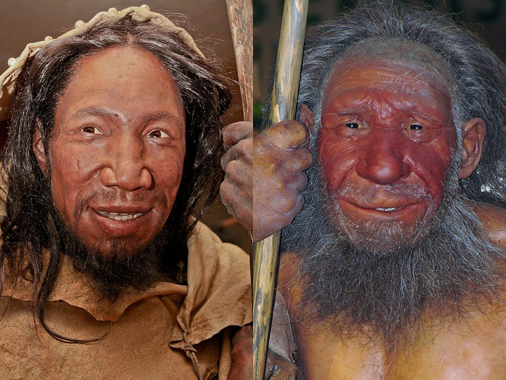 Photograph showing reconstructions of the faces of ancient Homo sapiens (left) and Homo neanderthalensis (right).