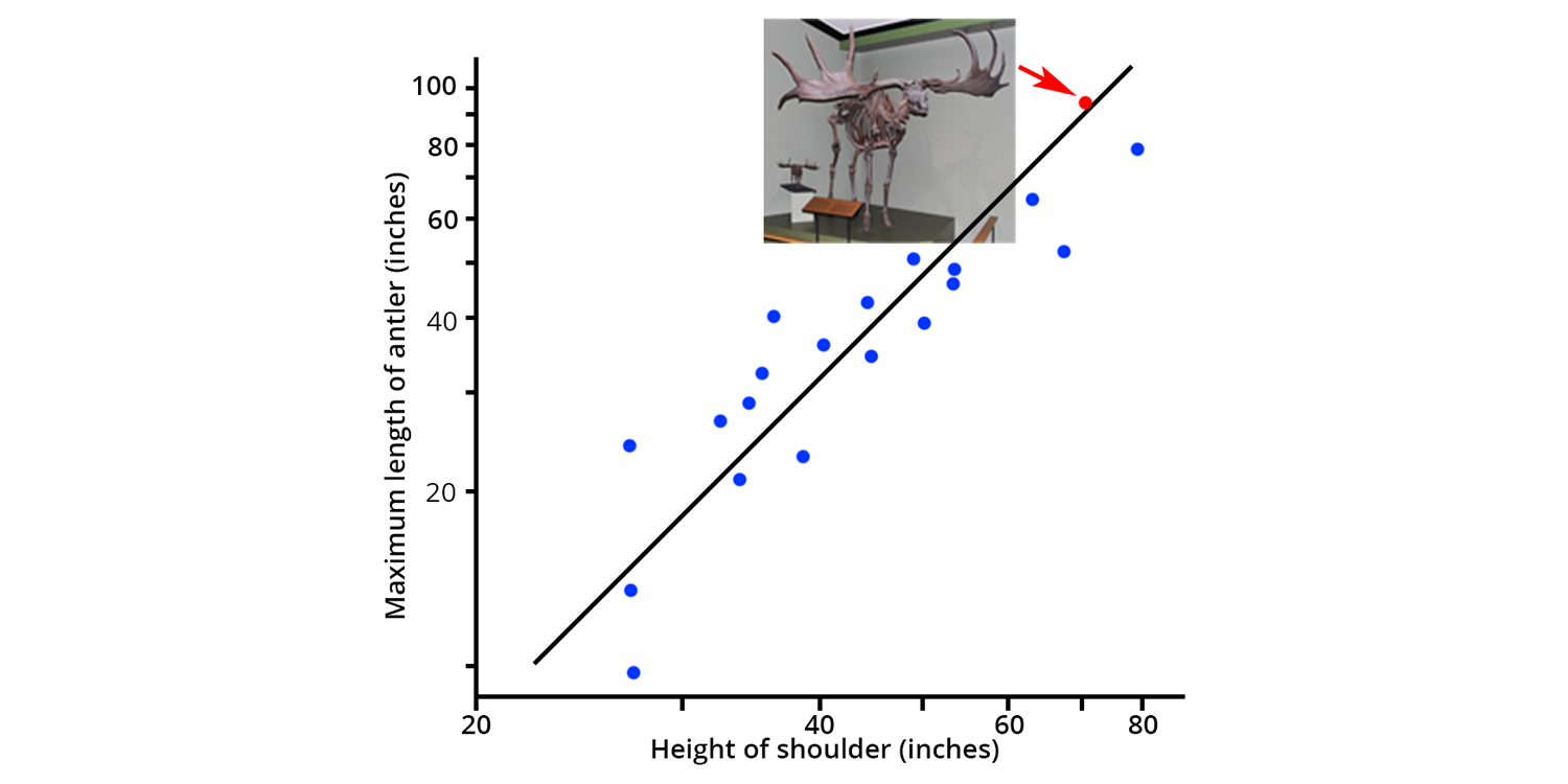 Plot showing the strong correlation between body size and antler size in modern deer and the Irish Elk.