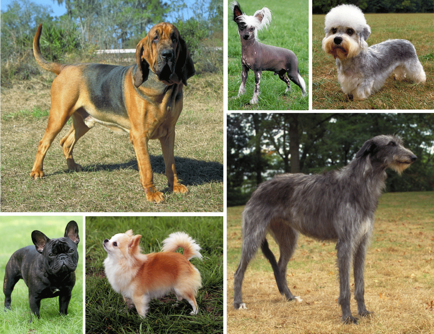 Six photographs showing a small sampling of the diversity of modern dog breeds.