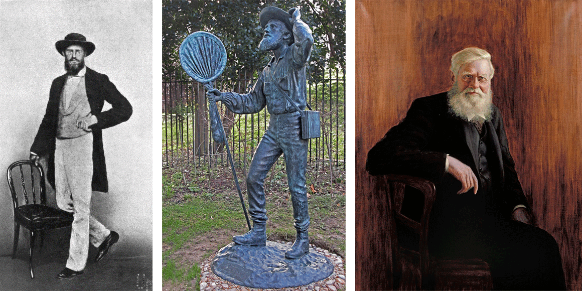 Alfred Wallace during different stages of his life. Left: photograph of Wallace during middle age, taken in Singapore in 1862. Middle: bronze statue of Wallace, showing him as a field naturalist (ca. 1859); statue created by Anthony Smith. Right: portrait of Wallace as an older man (by John William Beaufort).