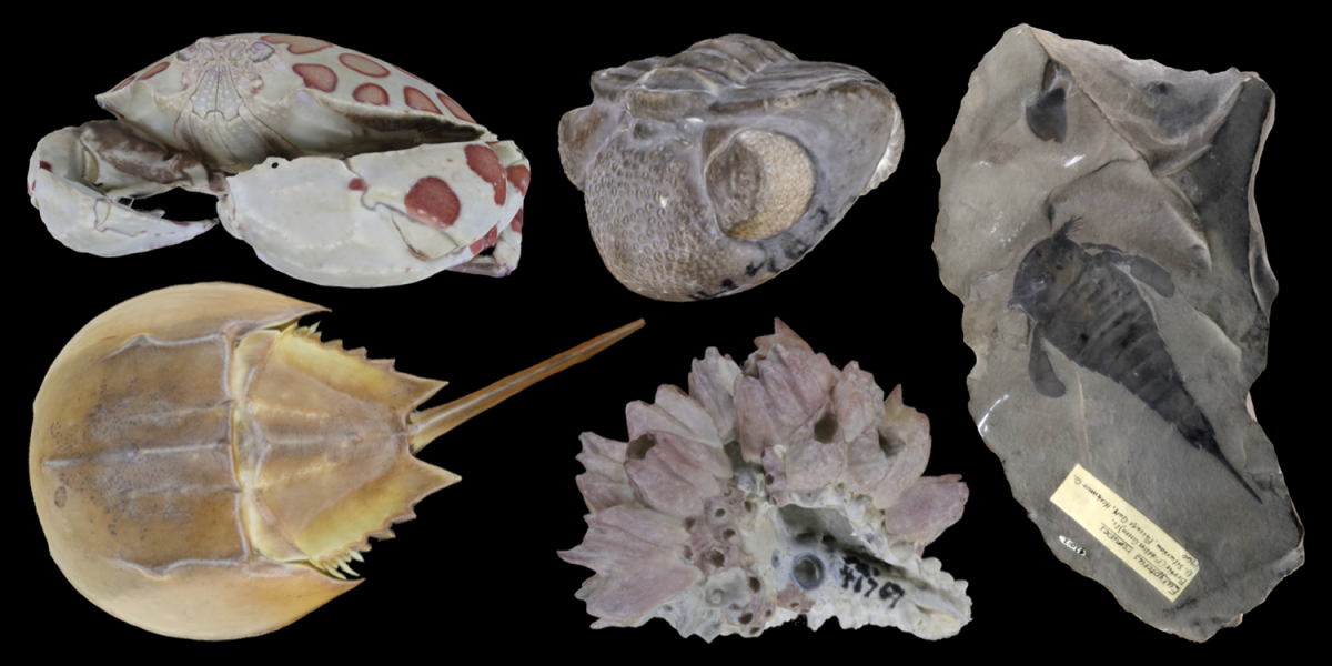 Five 3D models of arthropods.
