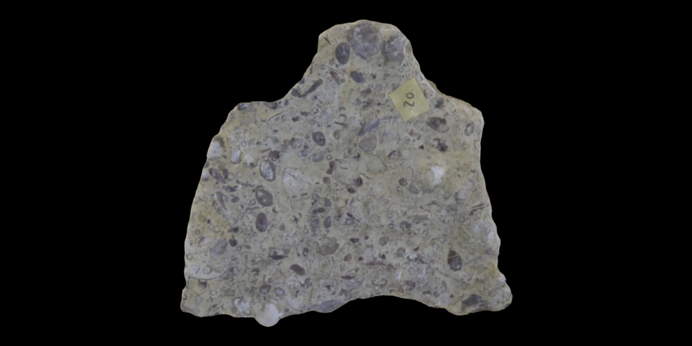 3D model of rock covered in ostracods.