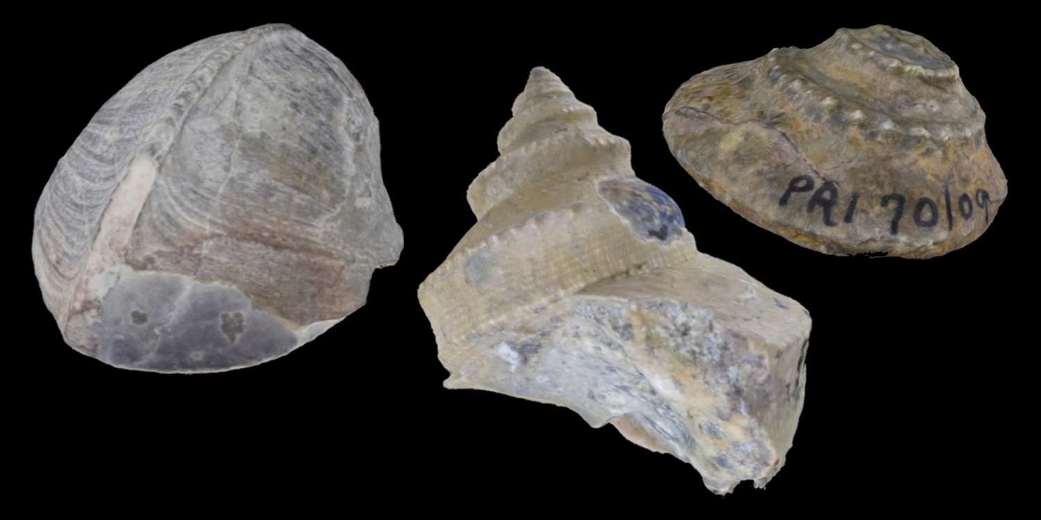 3D models of three different types of Paleozoic gastropods