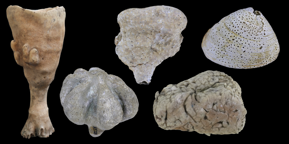 Representative 3D models of modern and fossil Demospongia.