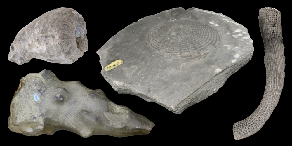 Representative 3D models of modern and fossil Hexactinellida sponges