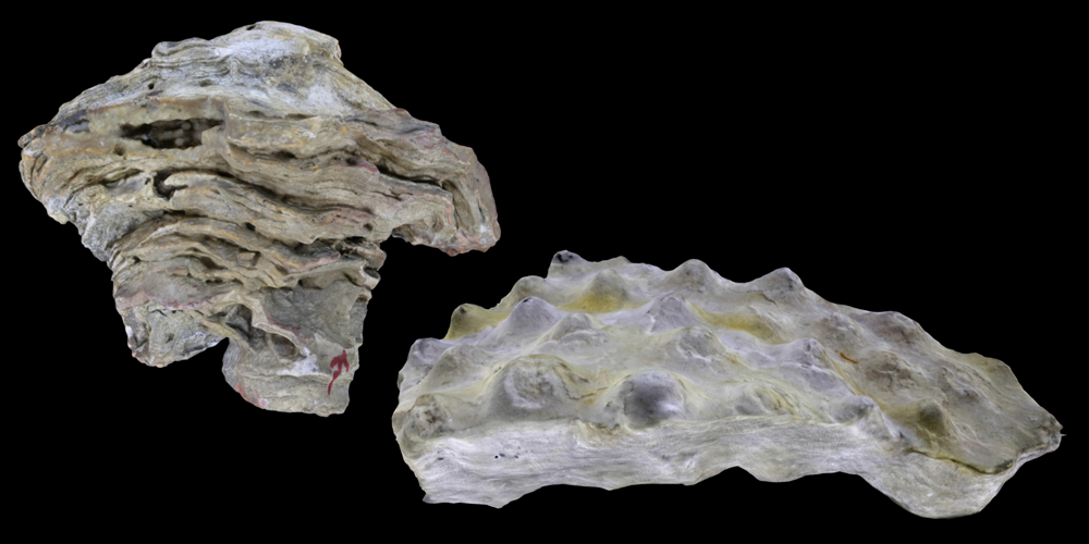 Representative 3D models of Stromatoporoidea sponges