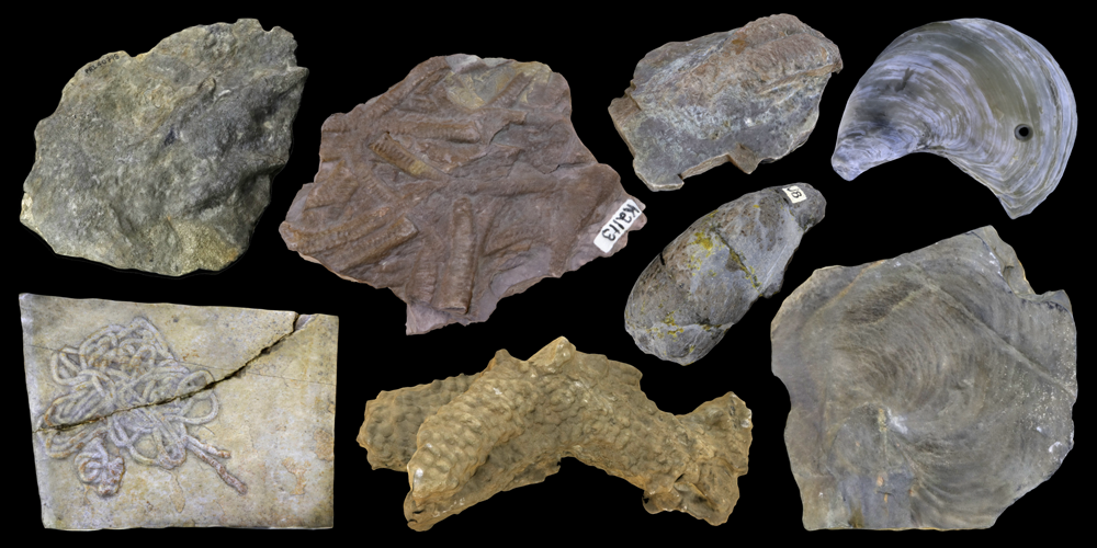 Eight 3D models of representative trace fossils.
