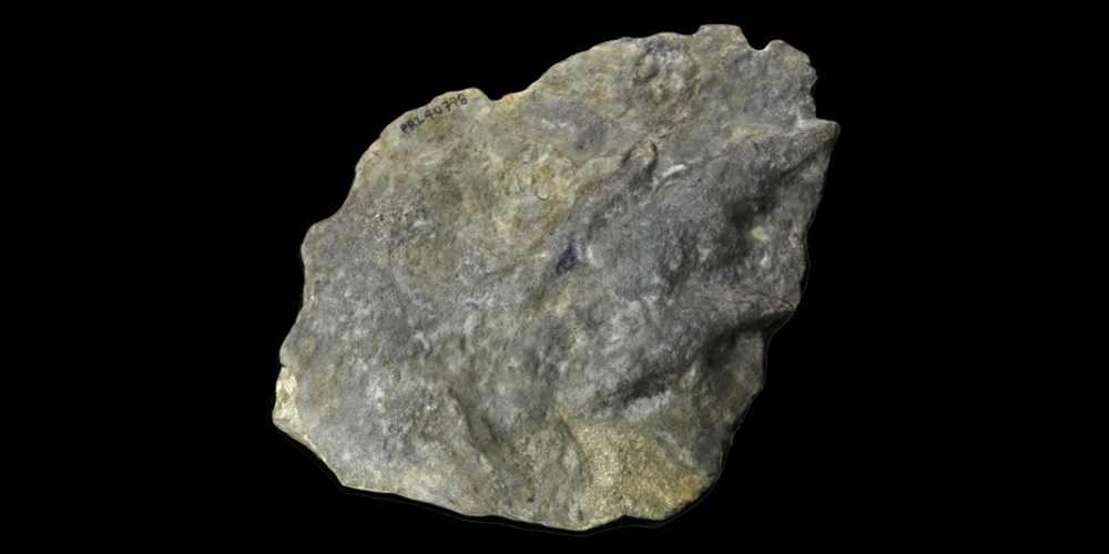 3D model of a dinosaur footprint (locomotion trace).