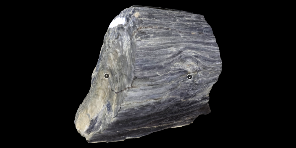 3D model of representative piece of fossilized wood.