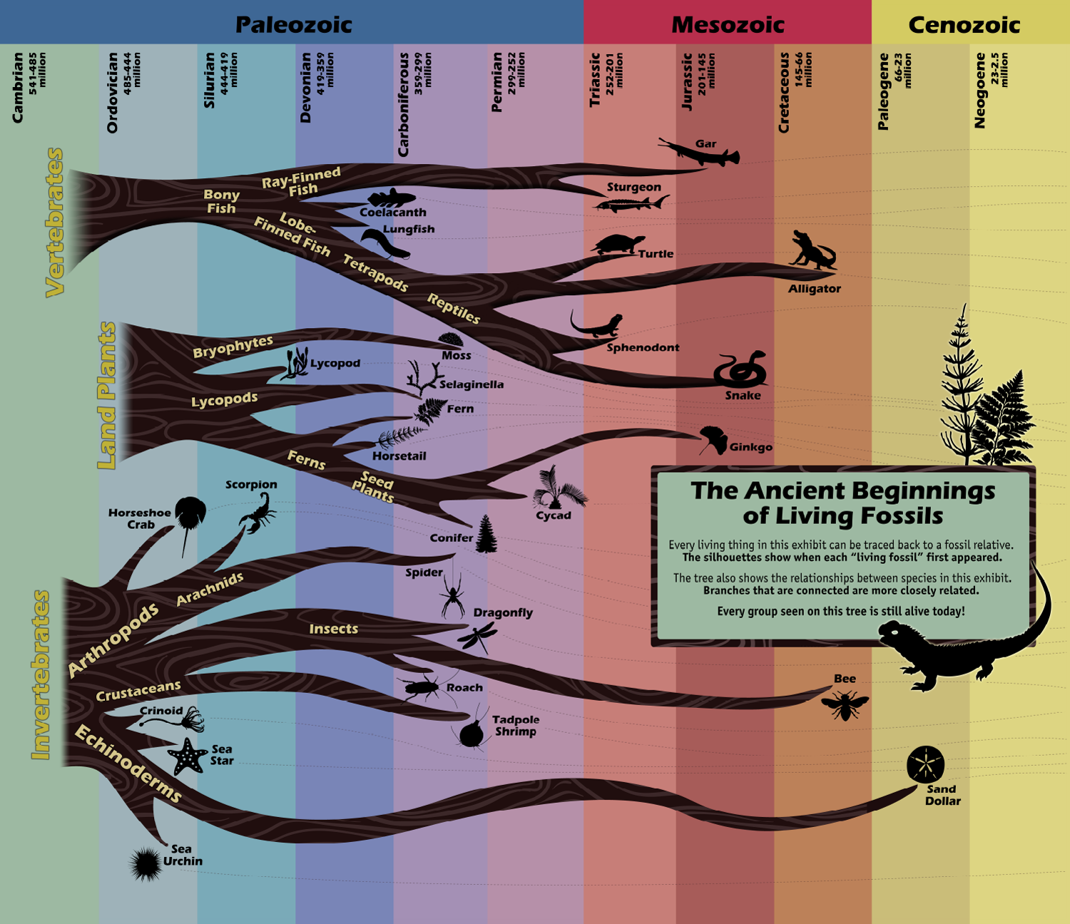 "Image is a diagram that shows the fossil histories and relationships of a variety of ""living fossils."""