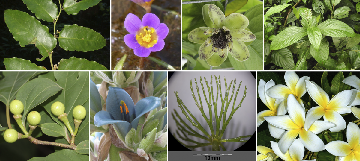 8-Panel figure showing images of the 8 major groups of angiosperms. See feature image caption for more details.