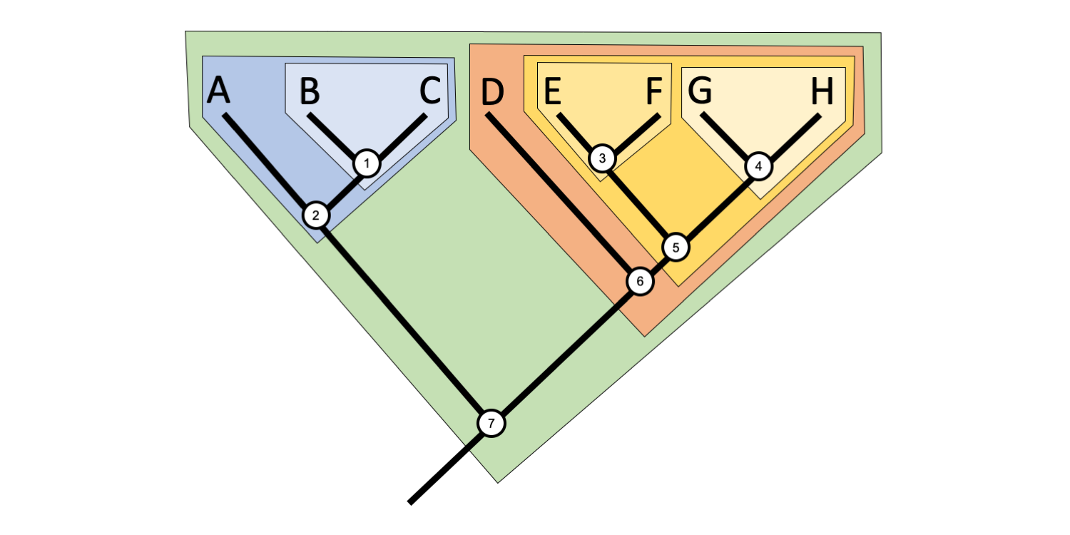 Example of a phylogenetic tree with different clades identified with different colors.