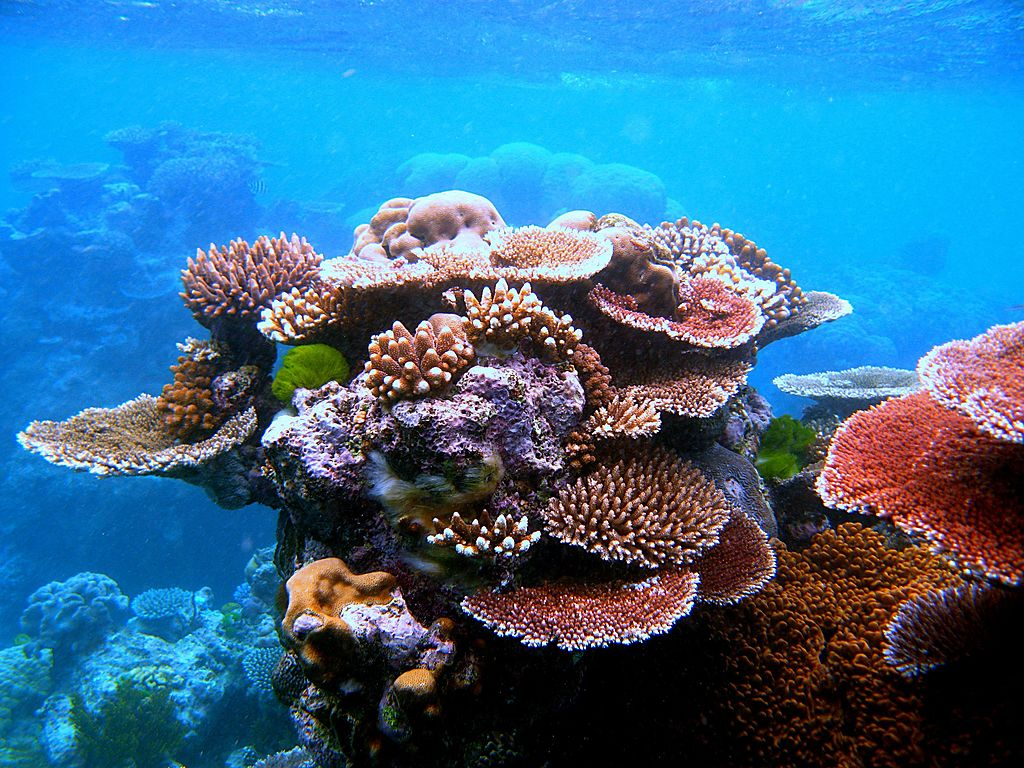 Photograph of a modern assortment of corals.