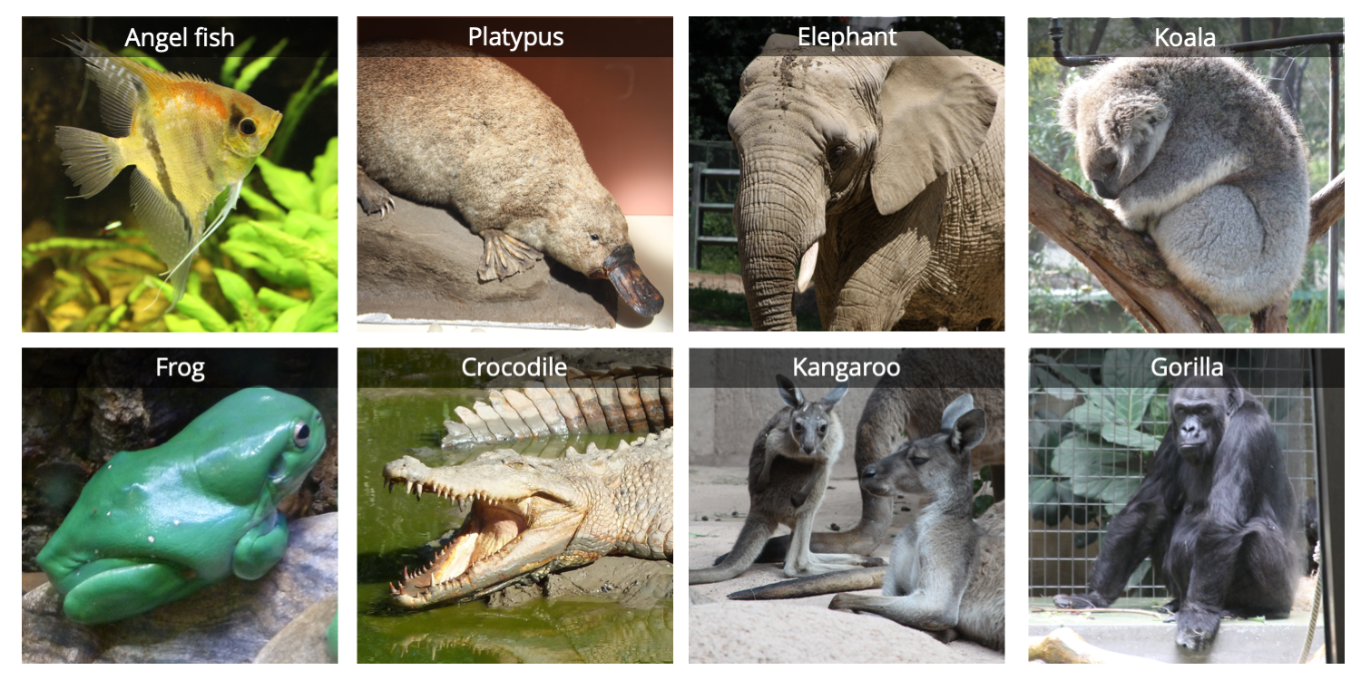 Composite images showing pictures of 8 vertebrates.