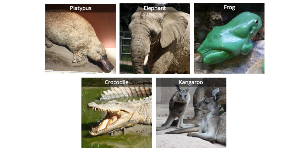 Image shows photographs of five vertebrates: a duck-billed platypus, an elephant, a frog, a saltwater crocodile, and a kangaroo.