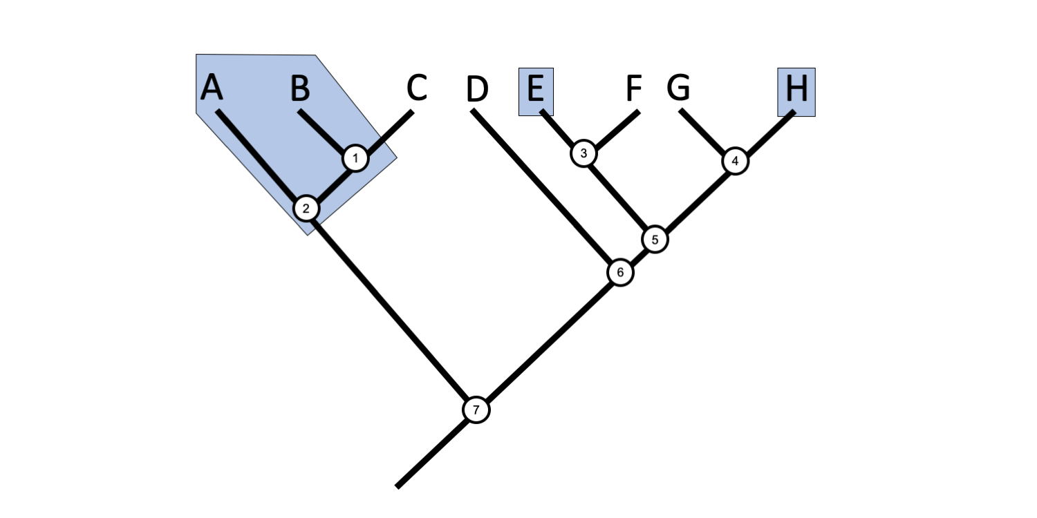 Example phylogenetic tree with a polyphyletic grouping identified.
