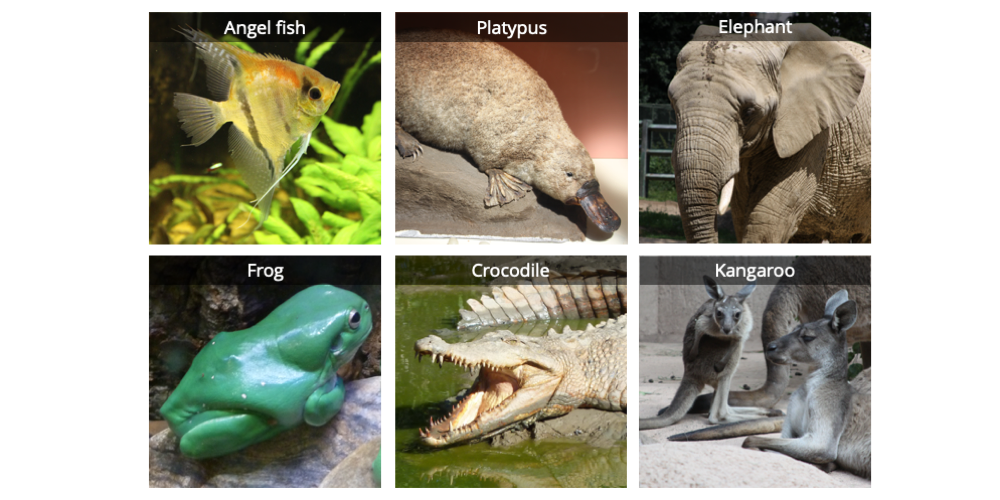 Image shows photographs of six vertebrates: an angel fish, a duck-billed platypus, an elephant, a frog, a saltwater crocodile, and a kangaroo.