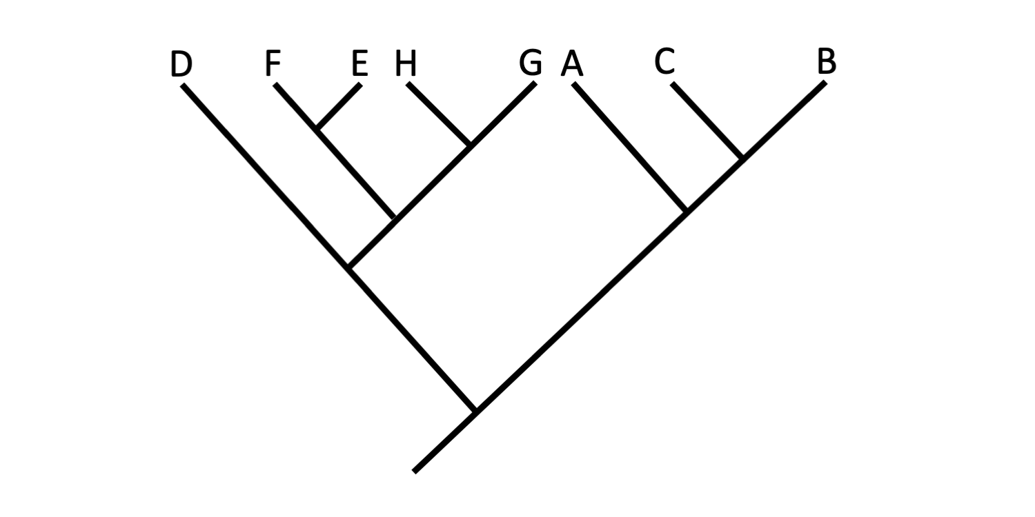 Image shows an example of a hypothetical phylogenetic tree.