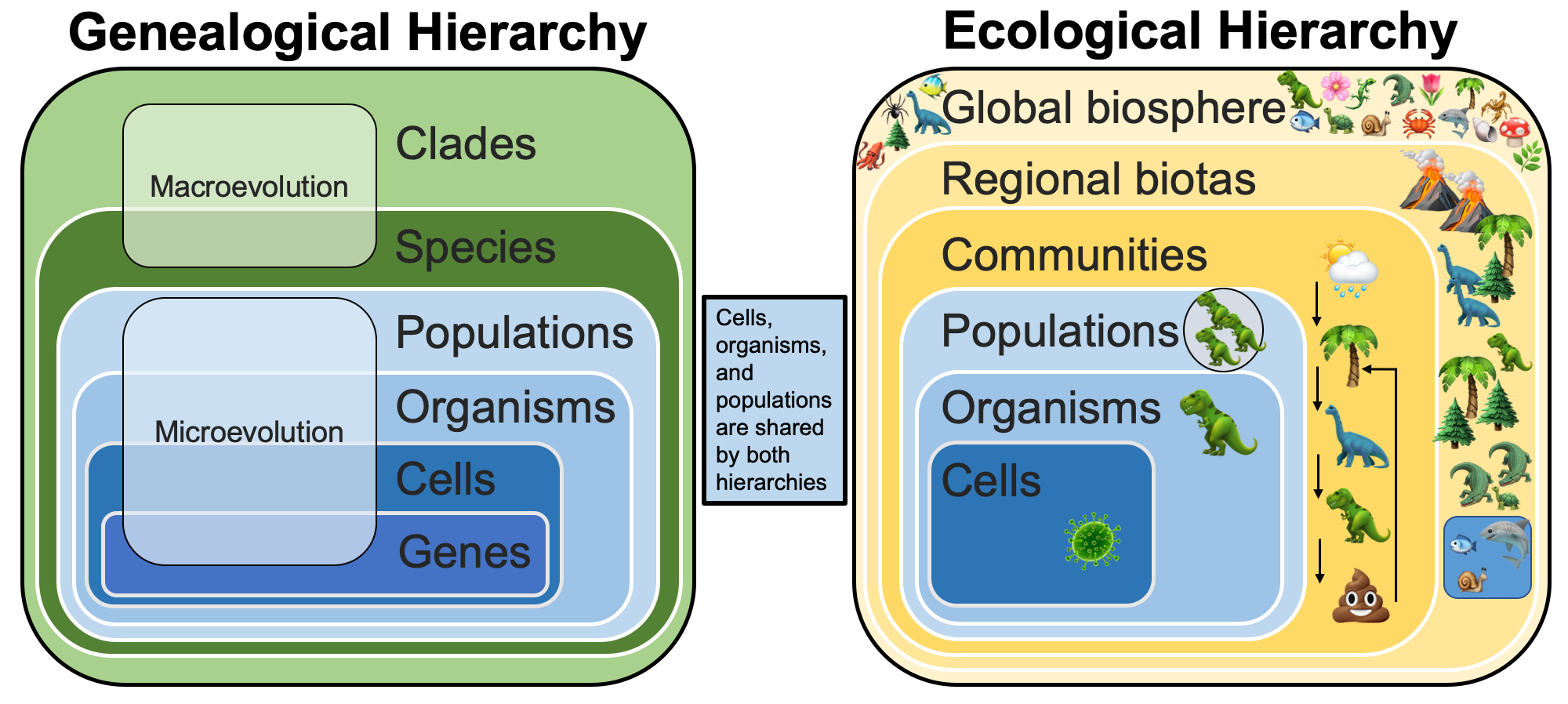 Diagram showing the genealogical and ecological hierarchies, as well as relationships between them.
