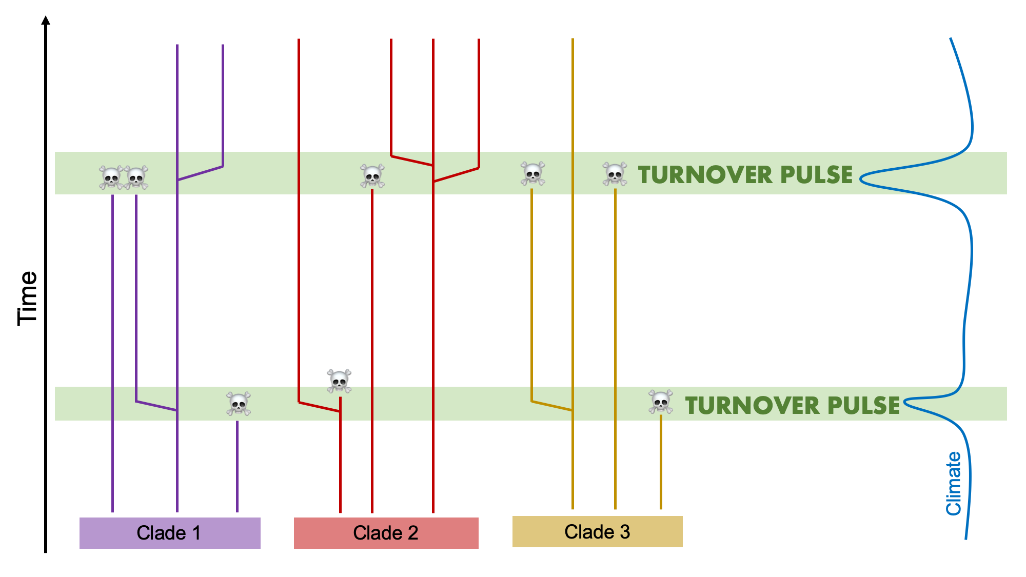 Image showing what a pattern of turnover pulse looks like.