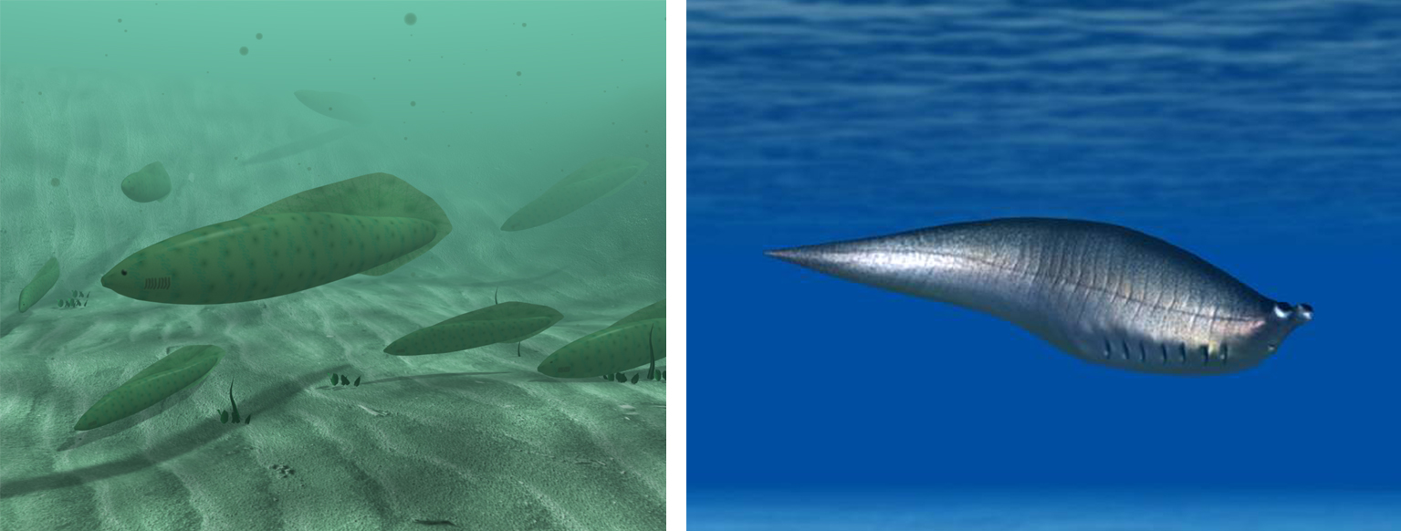 Images showing reconstructions of Haikouichthys and Metaspriggina.