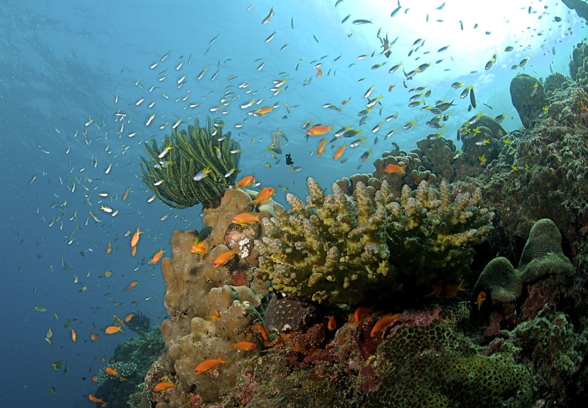 Coral reef with fish and corals