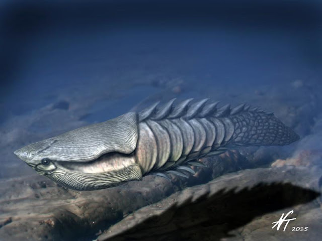 Image showing a reconstruction of the Early Devonian heterostracan Anglaspis heintzi.