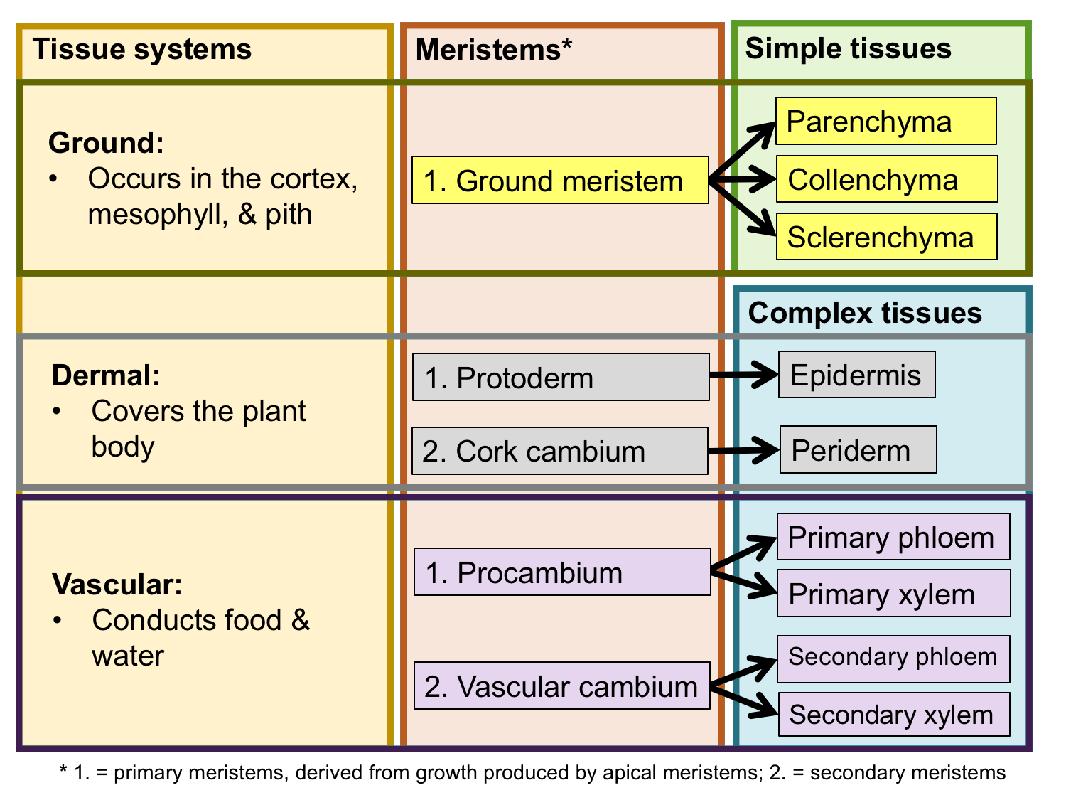 Chart summarizing the relationship between tissue systems, meristems, and tissues.