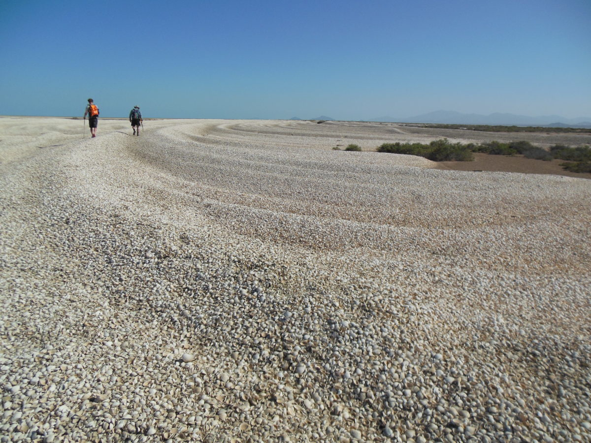 Two people walking across large accumulations of seashells