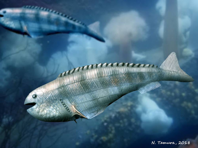 Image showing a reconstruction of the Early Devonian anaspid fish Cowielepis ritchiei.