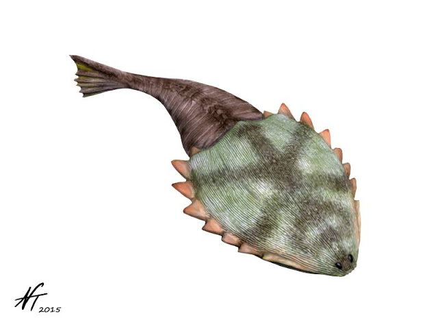 Image showing a reconstruction of the Early Devonian heterostracan Hibernaspis macrolepis.