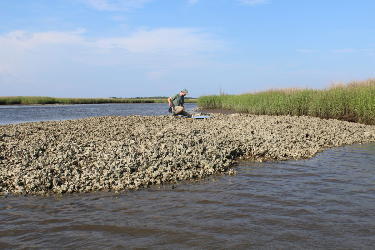 scientific sampling on an oyster reef