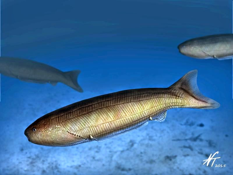 Image showing a reconstruction of the anaspid fish Birkenia elegans.