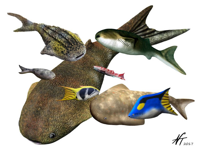 Image showing reconstructions of different types of thelodonts.