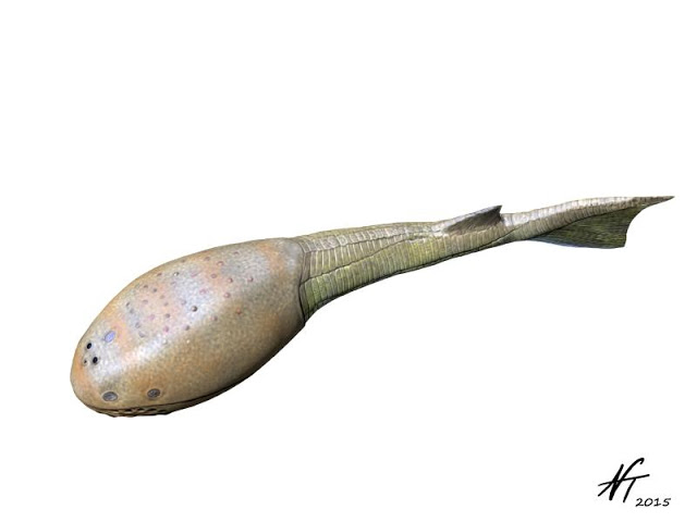Image showing a reconstruction of the Late Silurian osteostracan fish Tremataspis mammillata.
