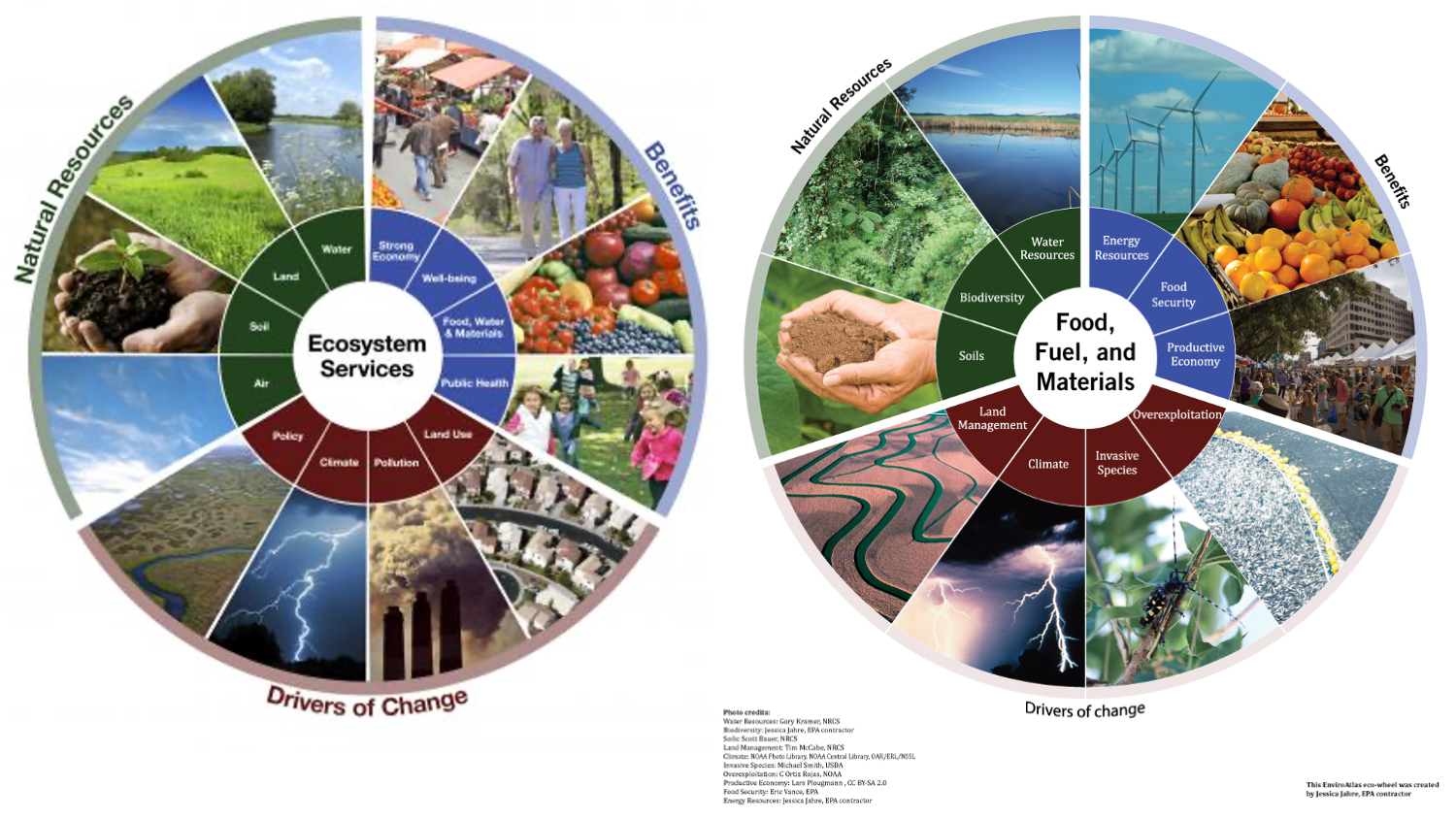 a visualization of the various ecosystem services