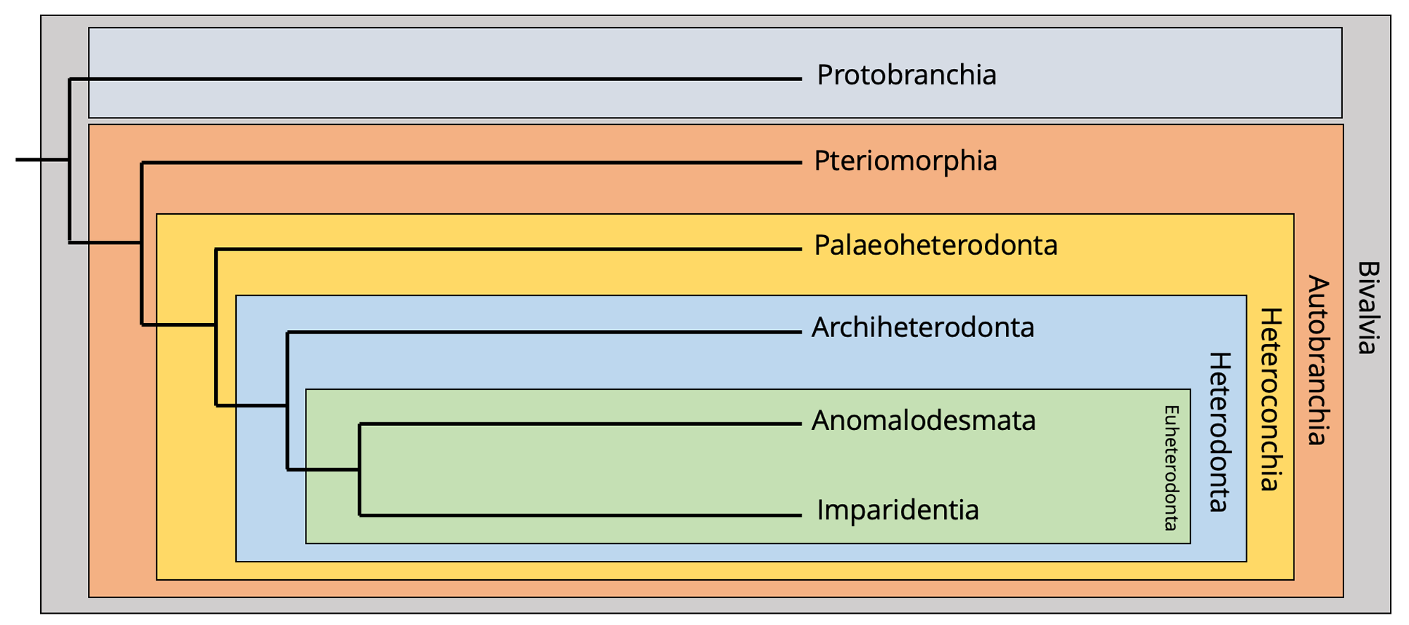 Image showing a phylogeny of bivalves.