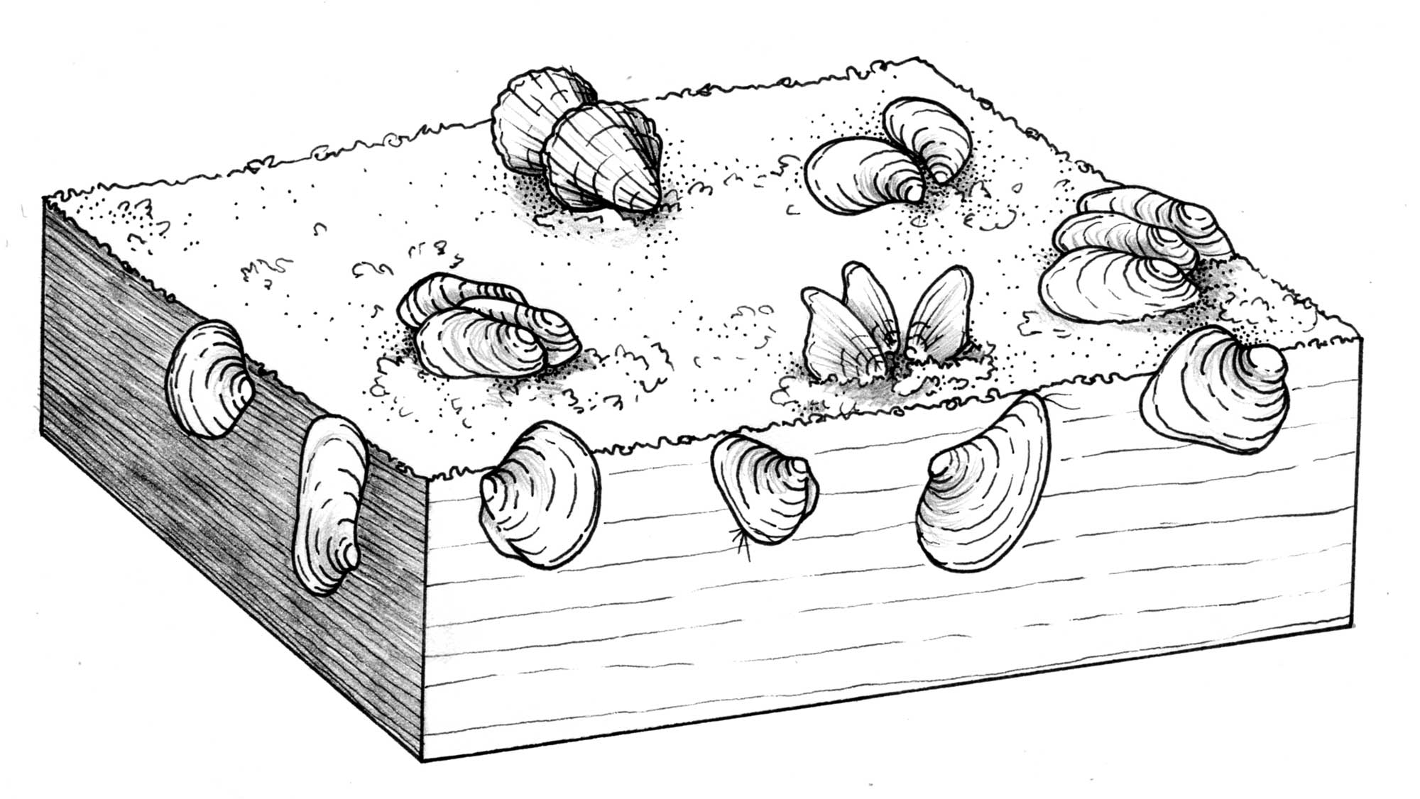 Illustration of the life habits of Ordovician bivalves.