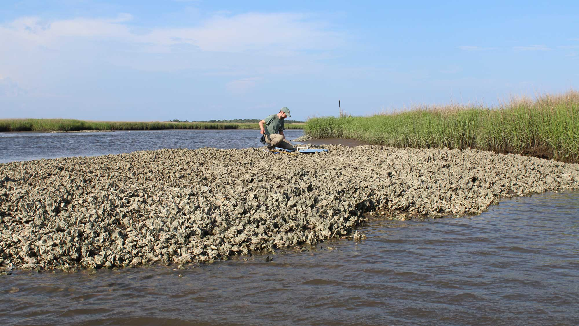 Photograph of a man collecting oyster samples.